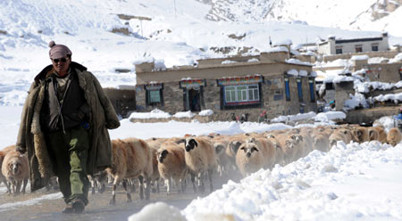 Lhunze County, 2008, Tibet- biggest snowstorm of all times
