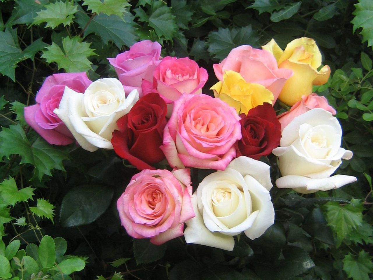 different types of roses - photo #18